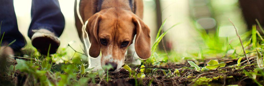 Hundeposer og dispensere-miljøvennlige-komposterbare-BioBag 2