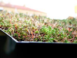 Zenzo Miljø - Sykkelhotell - Sykkelhus-tilvalg-Sedum på taket