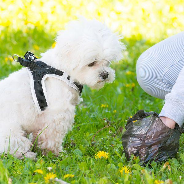 BioBag - Miljøvennlige hunderposer