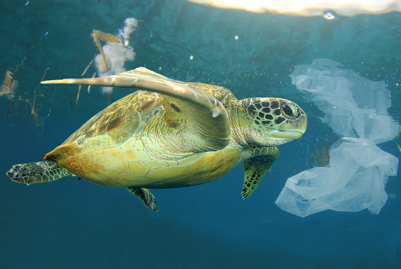 Biologisk nedbrytbar plast Skilpadde i havet med plastavfall