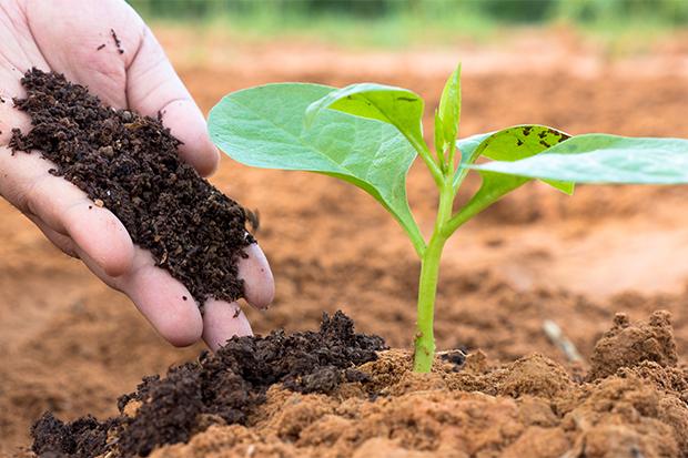BioBag_Bioplastens rolle_sirkulær økonomi_blogg